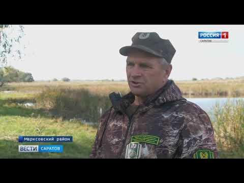 В Саратовской области открыт летне-осенний сезон охоты на дичь