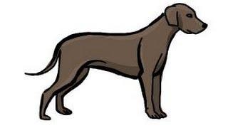 dog draw simple