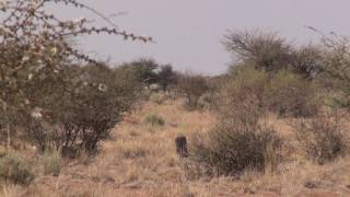 Blesbok Hunting in Namibia Part 3