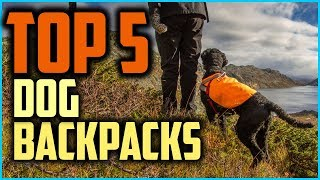 Top 5 Best Dog Backpacks in 2019