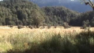 Deer Hunting on the Tussock Tops NZ