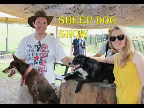 Sheep Dog Show - Lone Pine Koala Sanctuary, Brisbane