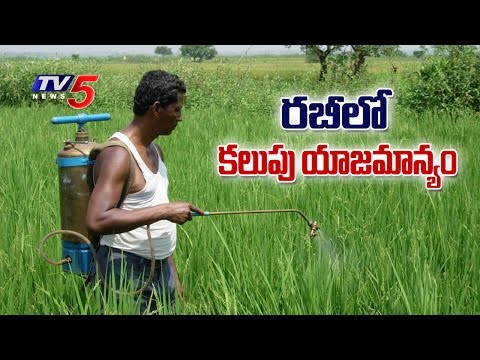 Experts Suggestions On Weed Management In Rabi Season | Annapurna | Telugu News | TV5 News