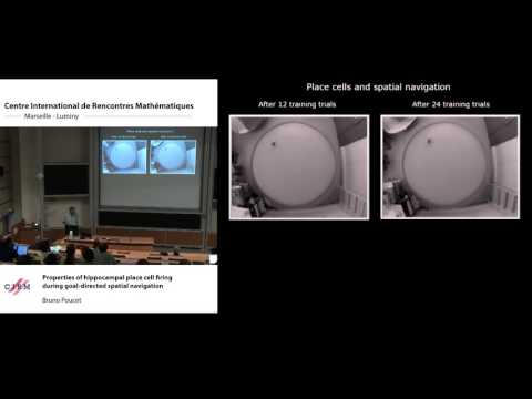Bruno Poucet: Properties of hippocampal place cells during goal-directed spatial navigation