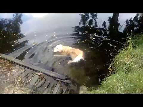 camino-de-santiago-baño-refrescante-en-el-río-sarria-de-sarria