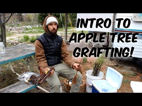 Intro to Apple Tree Grafting (with Trevor Newman)