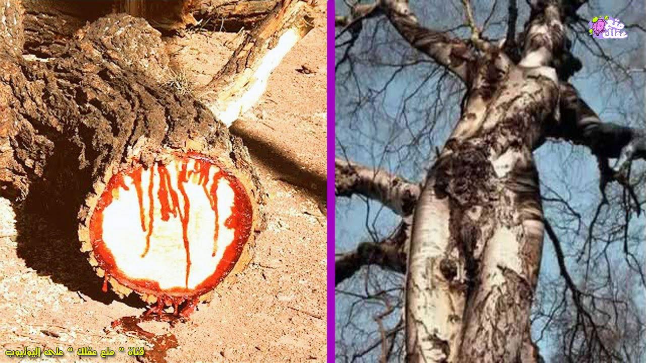 الـ 10 أشجار الأغرب على الأرض !!