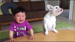 Baby Funny Video with Animals | Baby and Animals toy fun and fails | Funny Baby Videos