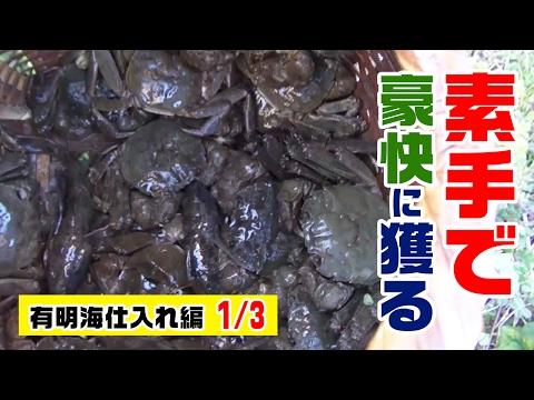 衝撃映像!蟹を素手で挟まれながら大量に捕る!巨大蟹山太郎を求めて