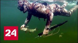 Видео подводной охоты на щуку, снятое Владимиром Путиным в Туве