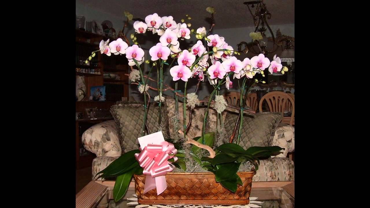 Orchid Arrangement Decorating Ideas Youtube