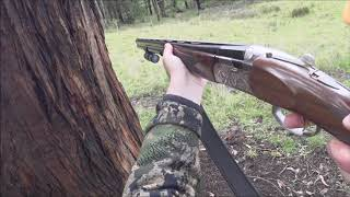 Driven Fox Hunt with Beretta Silver Pigeon 12G and Dachshunds Victoria 25/03/2020