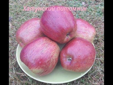 Сорт яблони Зорка в Московской области