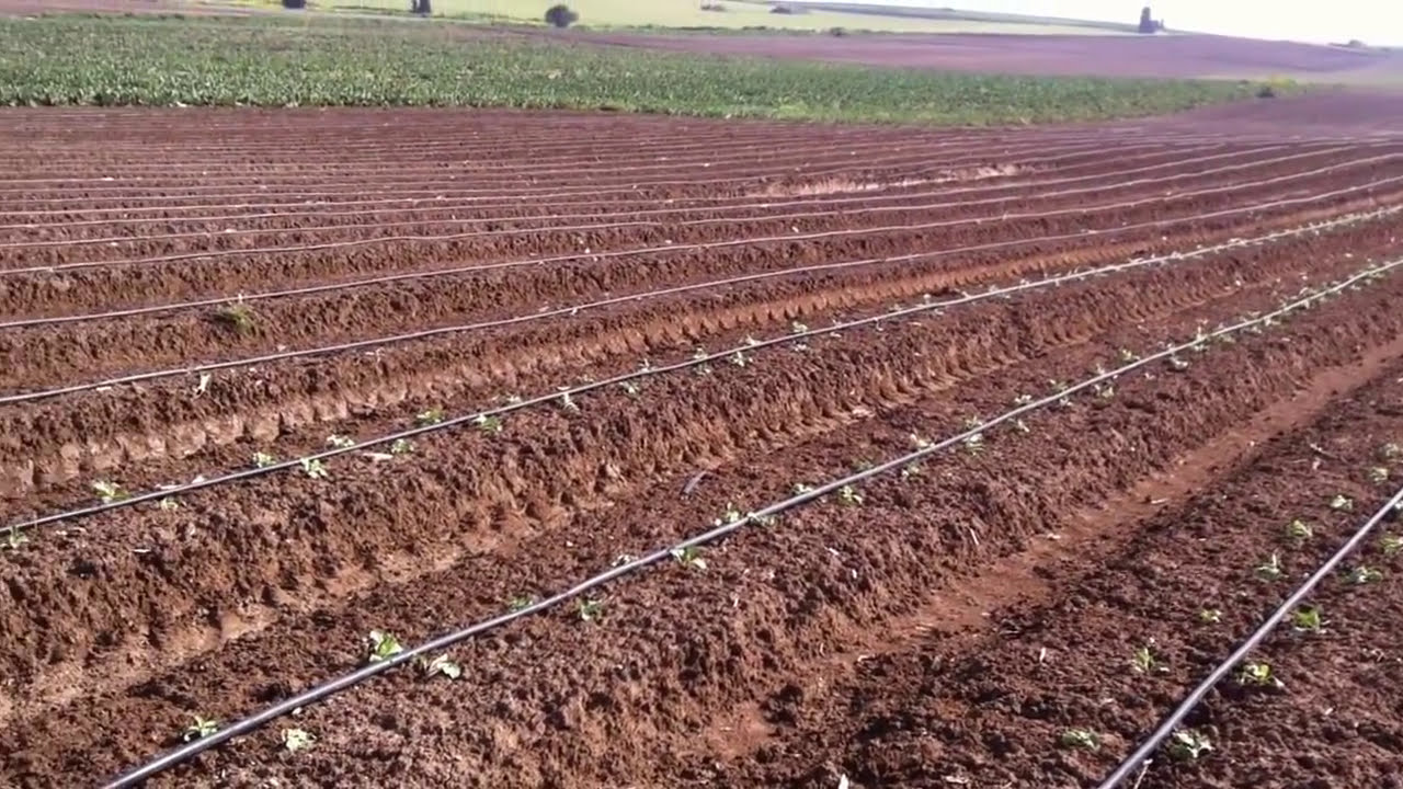 Drip Irrigation System In Israel Irrigation In Israel Doovi