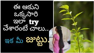 మహా బృంగరాజ తైలం  | Maha Bhringraj Herbal Hair Fall Remedy  | eclipta alba for hair