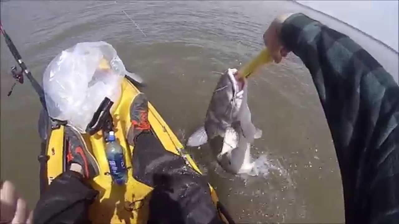 Kayak fishing kansas milford lake blue catfish youtube for Milford lake fishing report