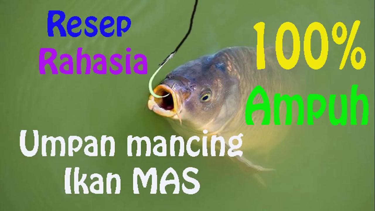 50 Resep Umpan Ikan Mas Jitu Lengkap Bisapinter