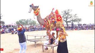 New Rajasthani Dance | new dj song 2019 | Marwadi Village dance