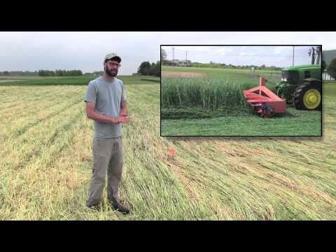Sustainable Farming Methods: Cover Crops & Strip-till, Row Covers, and Pest Scouting