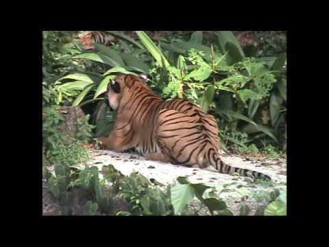 Singapore Zoological Gardens ( Singapore Zoo)