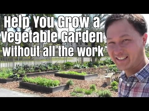 Help You Grow a Vegetable Garden in Miami without all the work