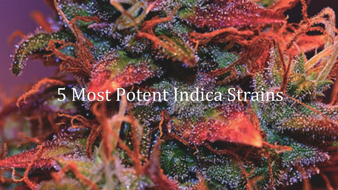 5 MOST POTENT INDICA STRAINS