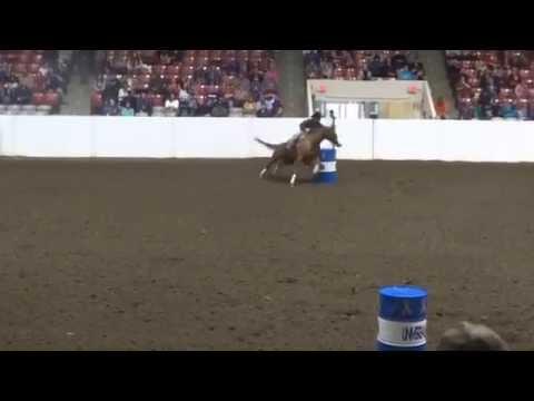 foxy stinsen owned by robin weaver ridden by brandon cullions congress 2015
