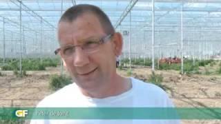 Nieuwe auberginekwekerij Peter de Jong van 5,5 hectare glasdicht