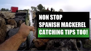 Catching Spanish Mackerel From Shore With Fishing Tips