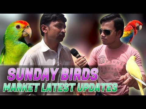 Sunday birds Market Lalukhet latest update birds for sale In (URDU/HINDI)
