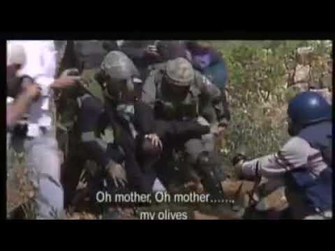 Israeli soldiers cut down Palestinian farmers' olive trees
