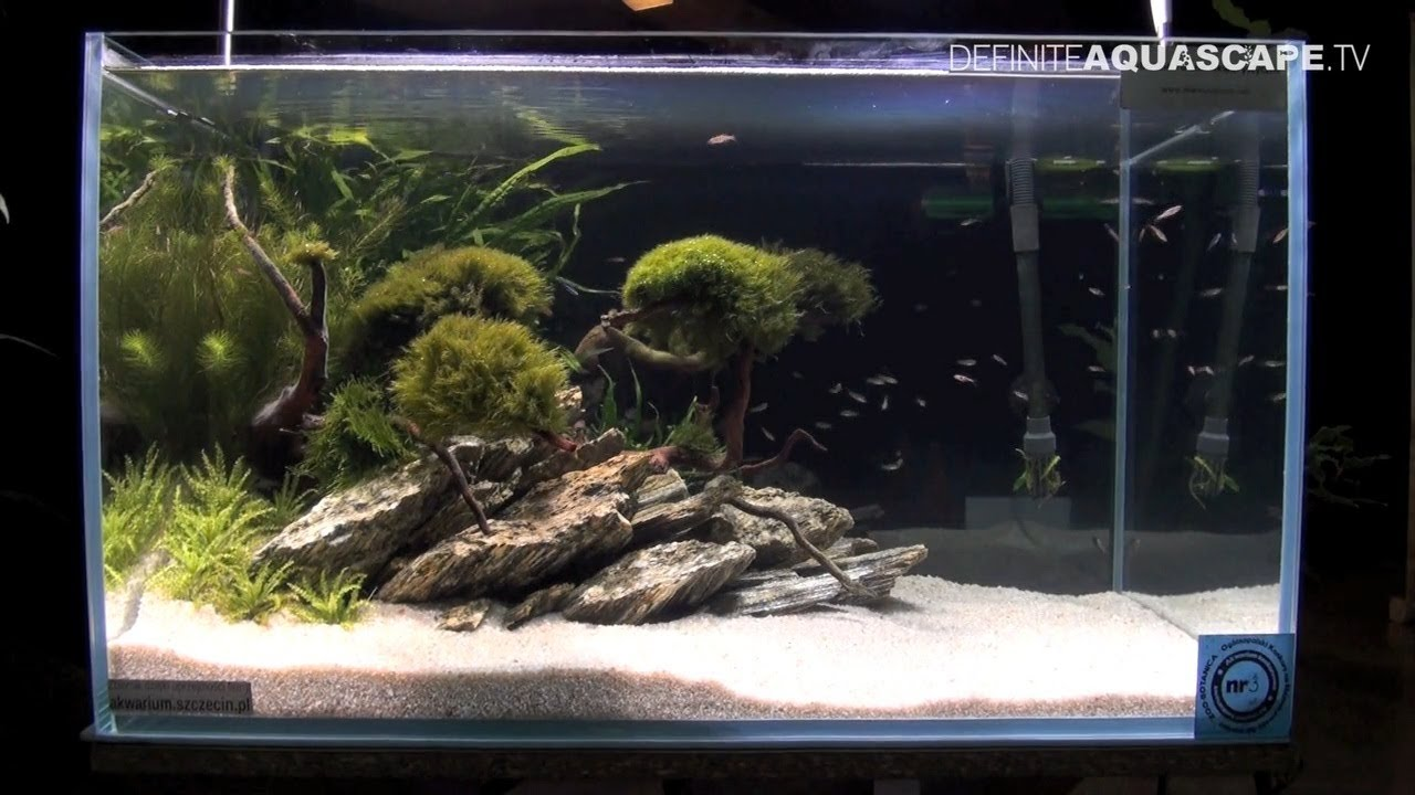 Aquascaping   Aquarium Ideas From ZooBotanica 2013, Pt.6   YouTube