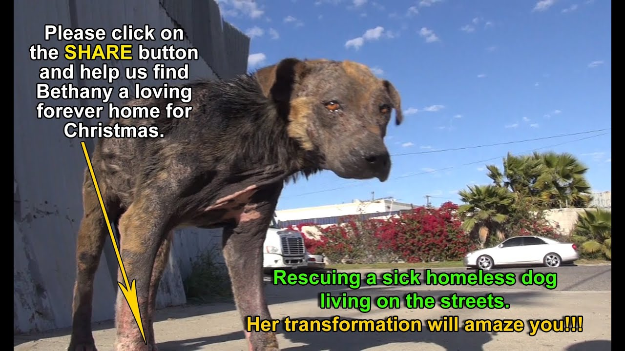 homeless dog living on...