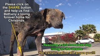 A homeless dog living on the streets gets rescued, transformed and is now looking for a home. thumbnail