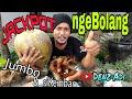 - JACKPOTS..!!! KELAPA JUMBO & TUNAS KEMBAR | nge-Bolang Bakalan Bonsai