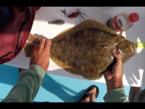 Montauk Meat Hunt! Fluke/Seabass + Jetty Searobins Every Cast