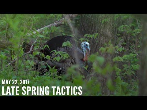 Late Season Turkey Hunting Tips   Reading Turkey Sign
