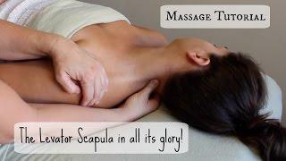 Massage Tutorial: The LEVATOR SCAPULA!