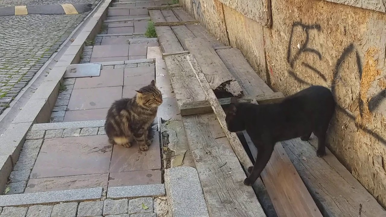 Angry Cats sounds, Black Cat Where Are You Going