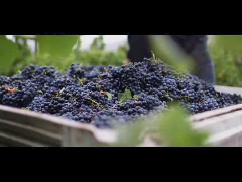 Mark West Wines: We're Pinot People