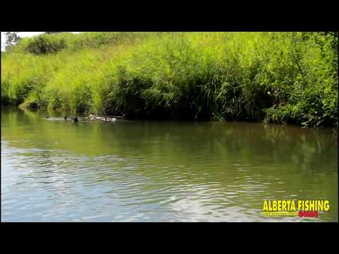 Hopper Fishing