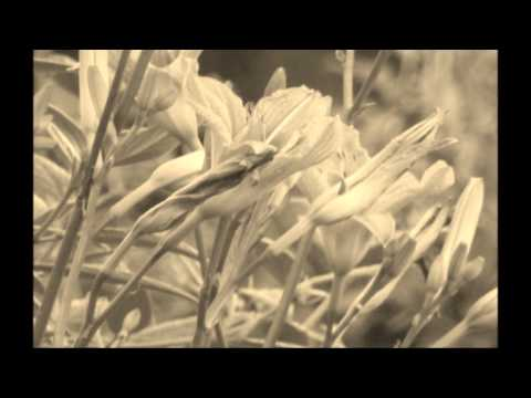 RAY CHARLES - Driftin'Blues  - lyrics