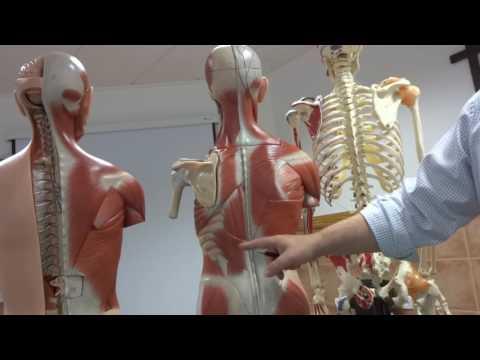 docencia anatomía: ESPALDA. Disección