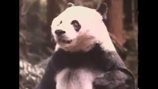 Az istenek a fejukre estek Kinaban is 1994-TRAILER