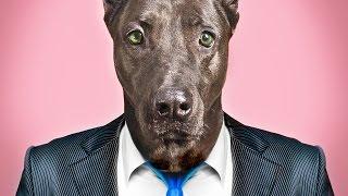 Handsome Man Tax - MGTOW