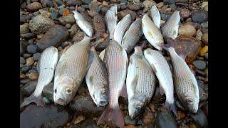 ХАРИУС ЛОВИТСЯ когда ЕМУ надо Рыбалка на хариуса в проводку Ловля хариуса в октябре