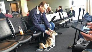 Хозяйка спросила, не мешает ли собака. Но ответ довел ее до слез.