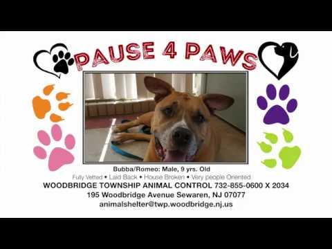 Woodbridge Animal Shelter & Pet Adoption Center | Woodbridge