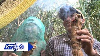 Khám phá Cà Mau: Thú vị nghề gác kèo ong | VTC