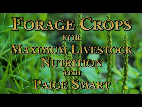 Forage Crops For Maximum Livestock Nutrition With Paige Smart